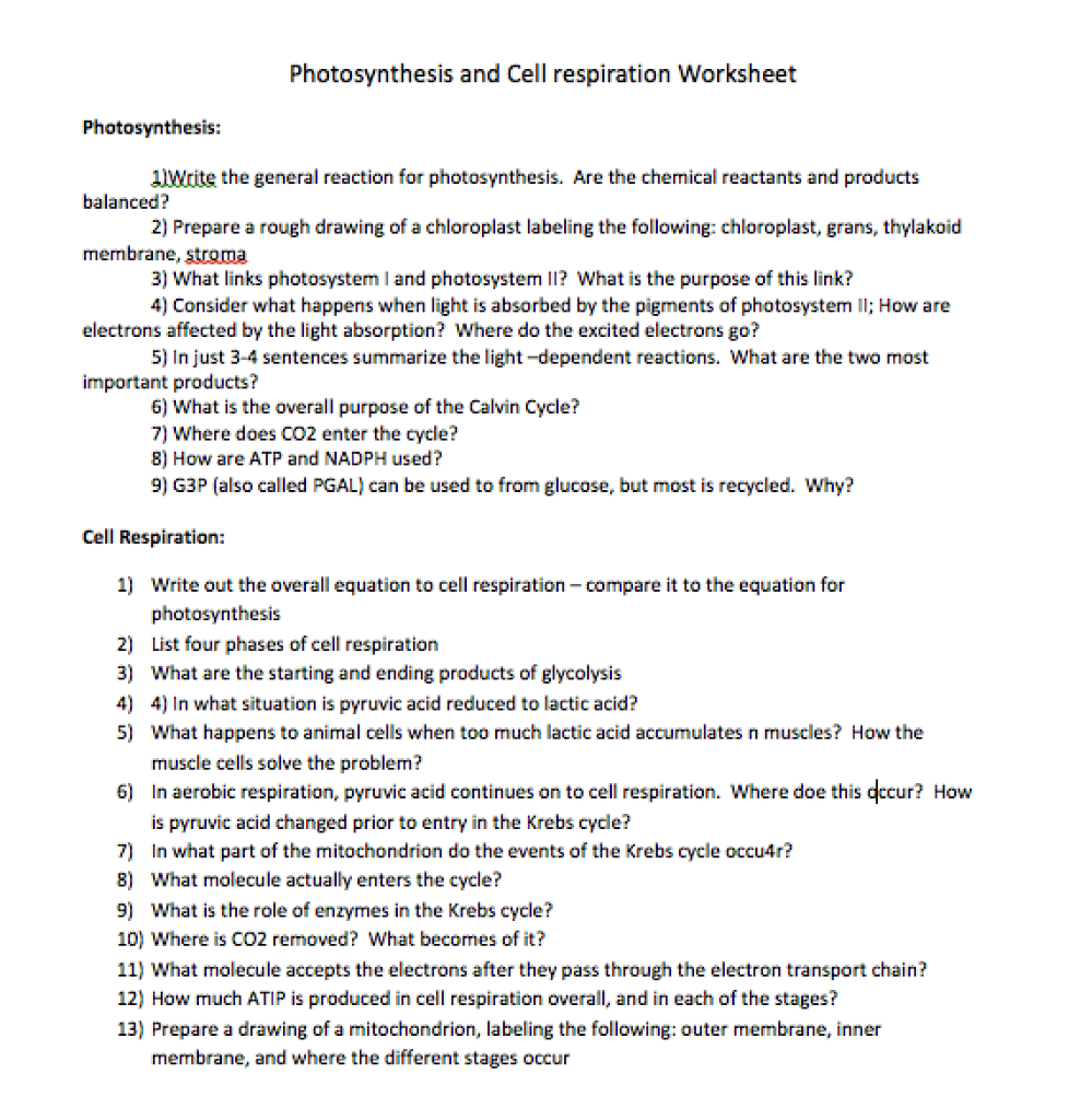 cellular respiration worksheets – trungcollection as well Photosynthesis And Cellular Respiration Worksheet   Modaklik besides Photosynthesis and Cellular Respiration Notes Outline Lesson Plan furthermore  additionally pare and contrast Cellular respiration and Photosynthesis lesson as well  as well Photosynthesis and Cellular Respiration Cycle   Worksheet together with Photosynthesis   Cellular Respiration Study Guide What is ATP and besides Respiratory Worksheets High   Learning S le for Educations besides Solved  Photosynthesis And Cell Respiration Worksheet Phot in addition  additionally Chapter 4 Photosynthesis and Cellular Respiration Worksheets Pages additionally Photosynthesis and Cellular Respiration Review Sheet as well photosynthesis worksheet 1   Photosynthesis   Cellular Respiration as well  as well Worksheet   Cellular Respiration Diagram Kids Voice Social. on cellular respiration and photosynthesis worksheet
