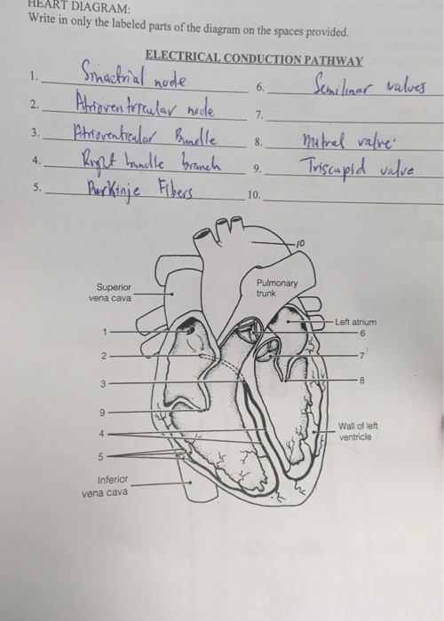 Solved: HEART DIAGRAM: Write In Only The Labeled Parts Of ...