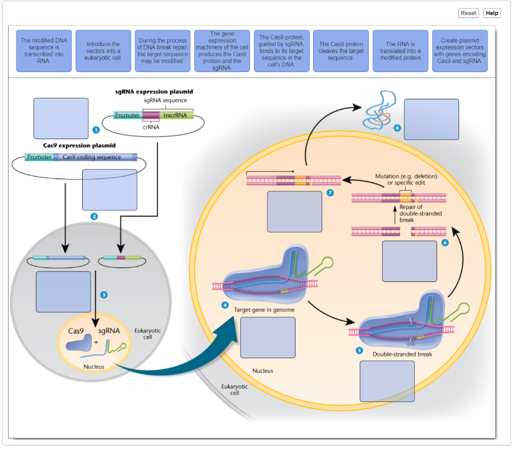 Researchers Show How Specific Gene >> Solved Hello I Need Some Assistance With A Problem I Enc