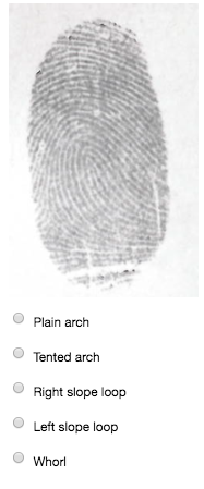 D). Identify the fingerprint pattern. O Plain arch Tented ...  sc 1 st  Chegg & Solved: Identify The Fingerprint Pattern. O Plain Arch Ten ...