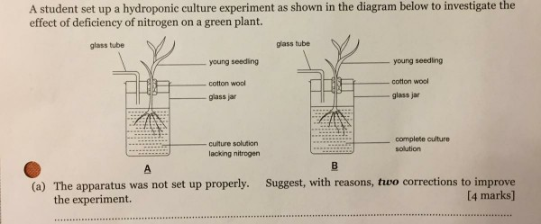 Solved: A Student Set Up A Hydroponic Culture Experiment A