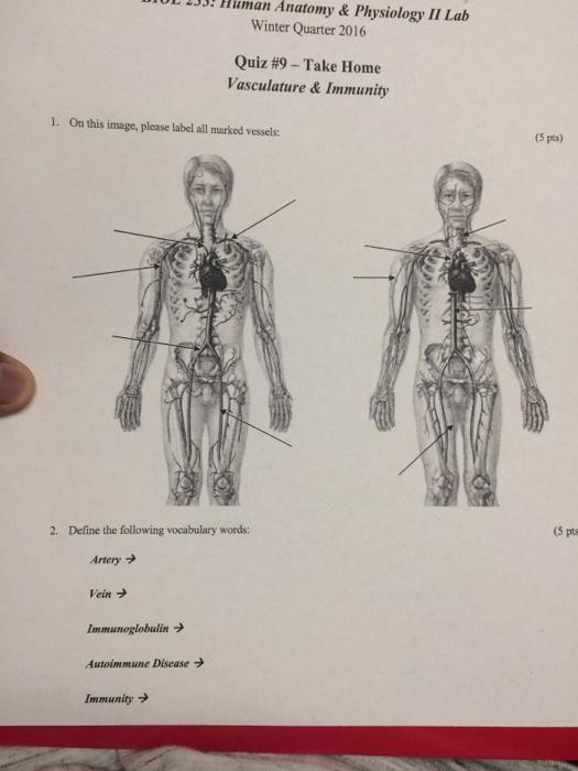 Anatomy physiology 1 lab quiz answers | Essay Academic Writing ...