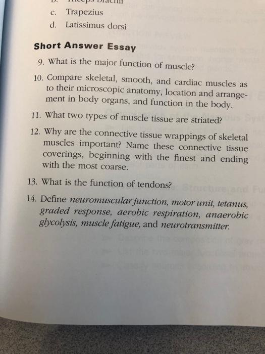 Solved C Trapezius D Latissimus Dorsi Short Answer Essa
