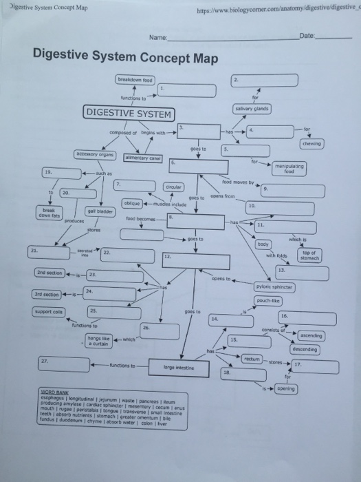 Solved: Digestive System Concept Map Https:/www.biologycor ... on
