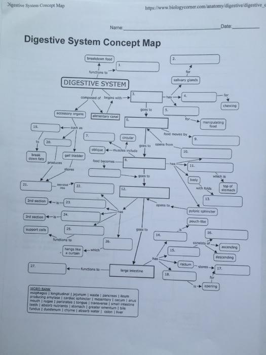 Solved Digestive System Concept Map Httpsbiologycor