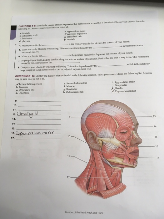 Solved Questions4 8 Identify The Muscle Of Facial Expres