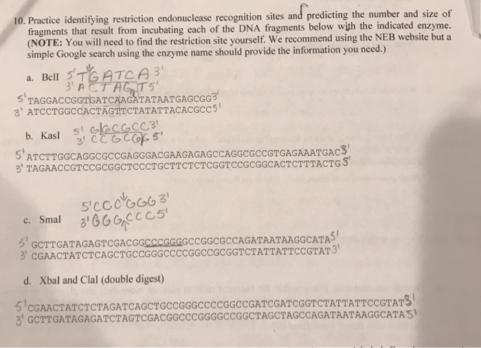 10. Practice identifying restriction endonuclease recognition sites and predicting the number and size of fragments that resu