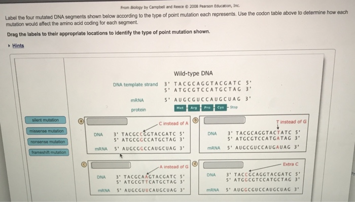 Part A-Base Substitution Mutations And Frameshift