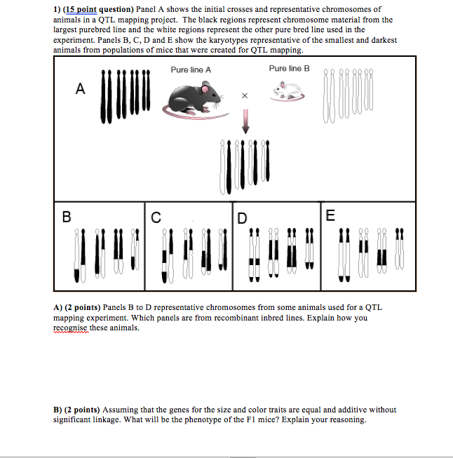 Solved: 1) (15 Point Question) Panel A Shows The Initial C ... on marker assisted selection, gene mapping, copy-number variation, test cross, quantitative genetics, genetic linkage, dihybrid cross,