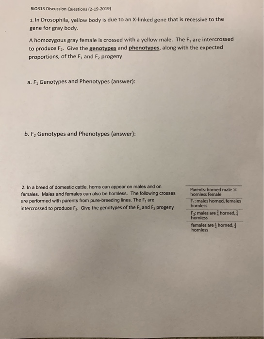 BIO313 Discussion Questions (2-19-2019) 1. In Drosophila, yellow body is due to an X-linked gene that is recessive to the gen