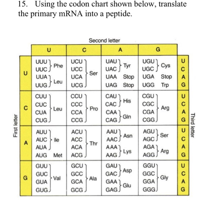 Using The Codon Chart Shown Below Translate Primary Mrna Into A Peptide
