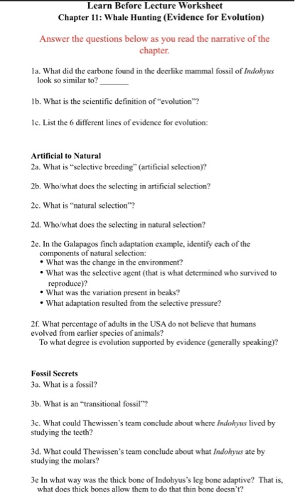 Solved: Learn Before Lecture Worksheet Chapter 11: Whale H ...