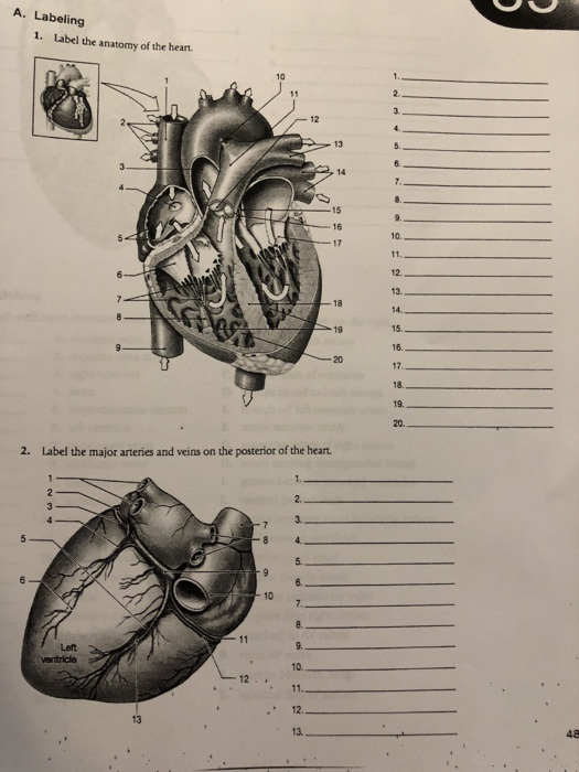 Solved A Labeling 1 Label The Anatomy Of The Heart 13