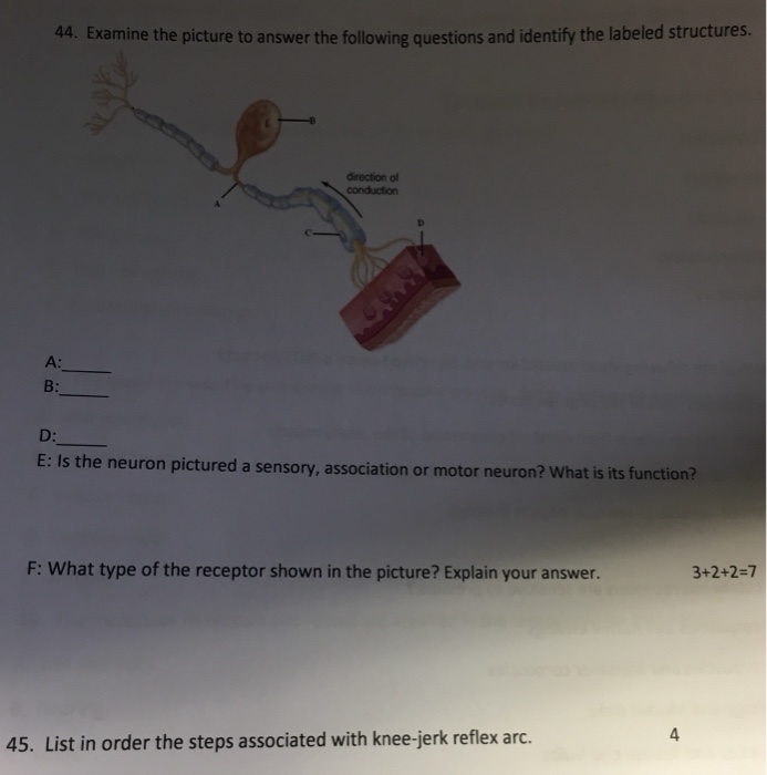 Solved: 44  Examine The Picture To Answer The Following Qu