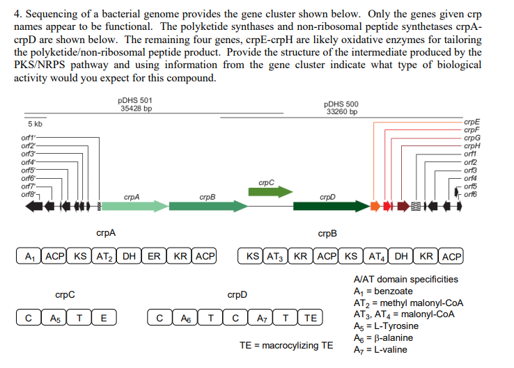 4  Sequencing Of A Bacterial Genome Provides The G