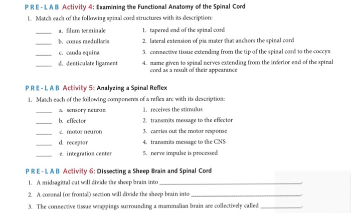 Solved: PRE-LAB Activity 4: Examining The Functional Anato ...