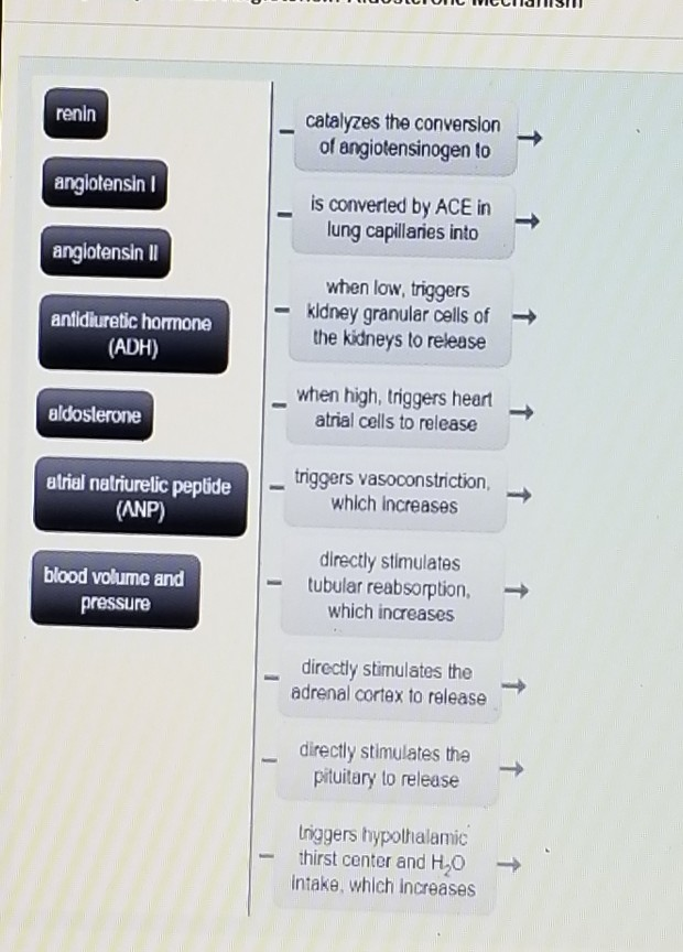Concept Map Renin Angiotensin Aldosterone Mechanism.Solved Using No More Than 13 Propositions Create A Conce