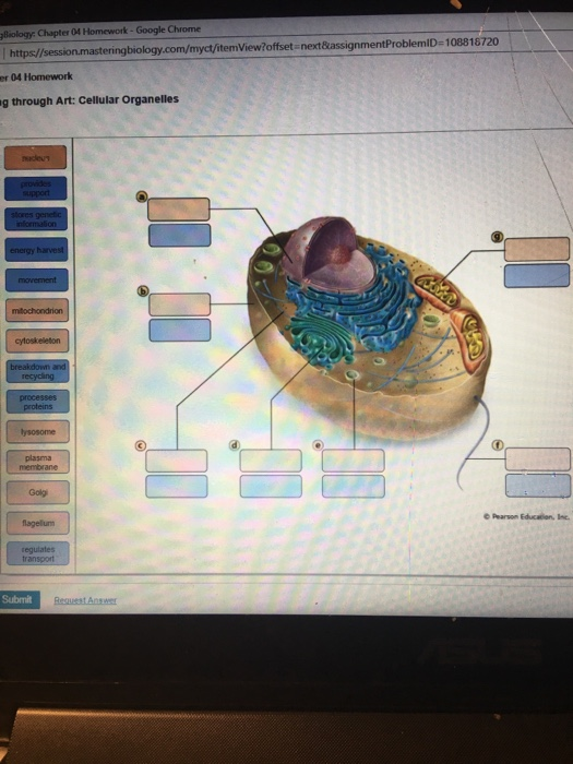 solved biology chapter 04 homework google chrome https