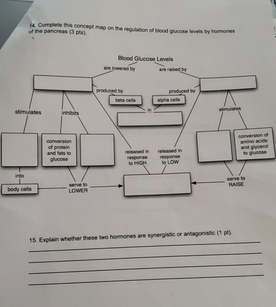 Solved: 4. Complete This Concept Map On The Regulation Of ...