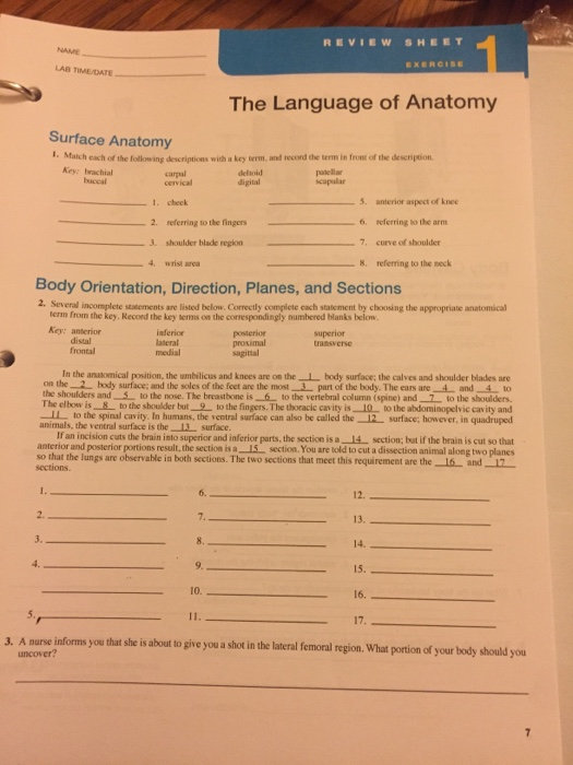 Solved: REVIEW SHEET LAB TIMEADATE EXERCISE The Language O ...