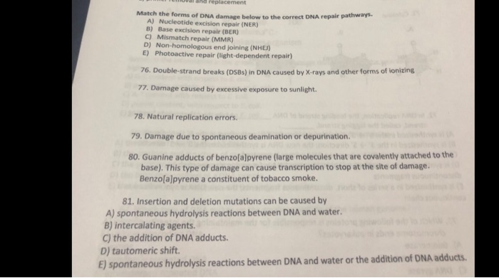 Solved: Match The Forms Of DNA Damage Below To The Correct