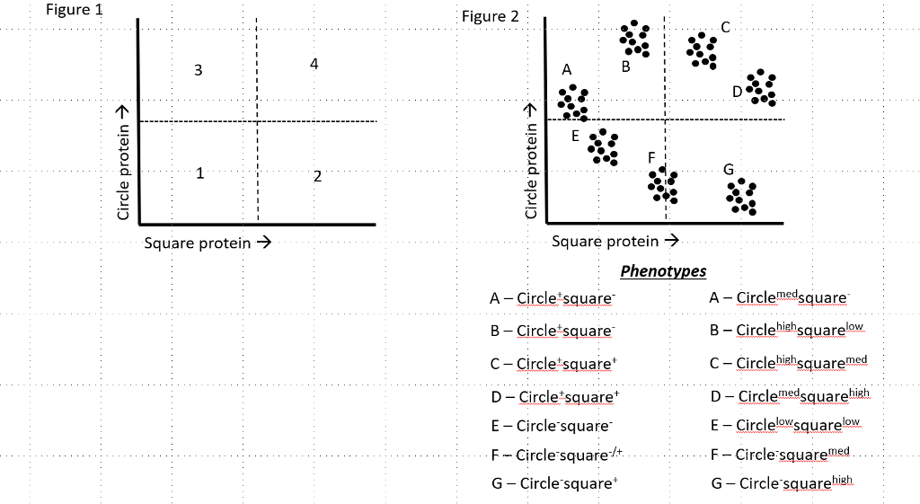 Solved Question 2 Quiz Phenotypes For Cell Populations Ca