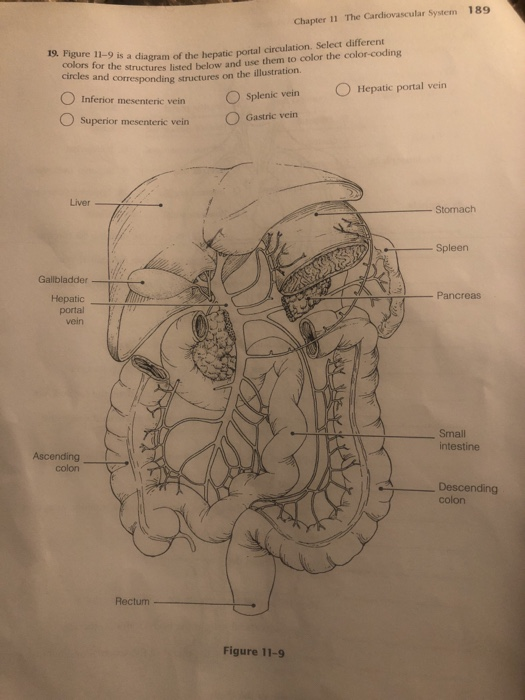 Solved Chapter 11 The Cardiovascular System 189 Of The He