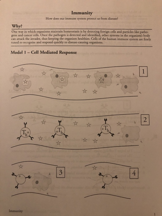 pogil activities for ap biology answer key immunity