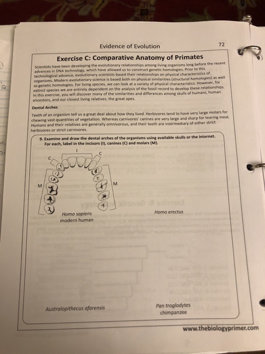 Evidence Of Evolution 72 Exercise C Comparative A Chegg