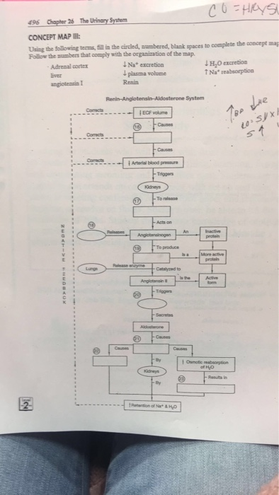 Solved 496 Her 26 The Urinary System Concept Map Uning Th
