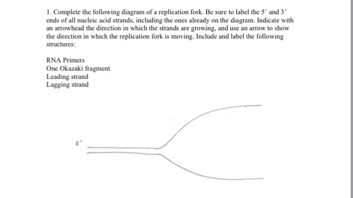 Solved 1 Complete The Following Diagram Of A Replication