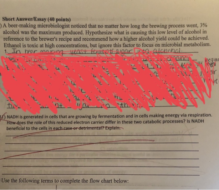 Solved: Short Answer/Essay (40 Points) A Beer-making Micro
