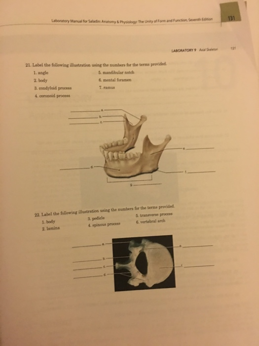 Solved: Laboratory Manual For Saladin: Anatomy & Physiolog ...