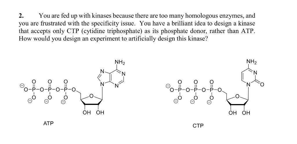 2. you are frustrated with the specificity issue. You have a brilliant idea to design a kinase that accepts only CTP (cytidin