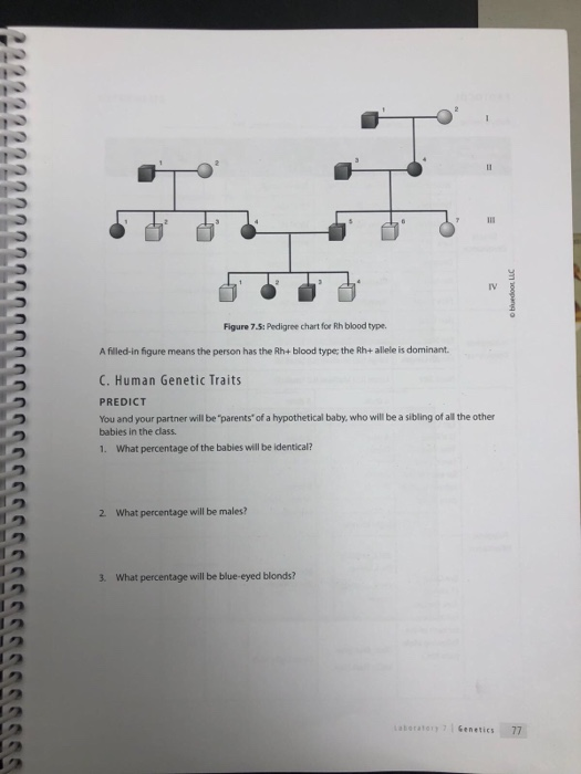 S Pedigree Chart For Rh Blood Type A Filled In