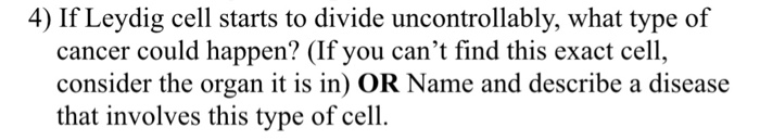 4) If Leydig cell starts to divide uncontrollably, what type of cancer could happen? (If you cant find this exact cell, cons