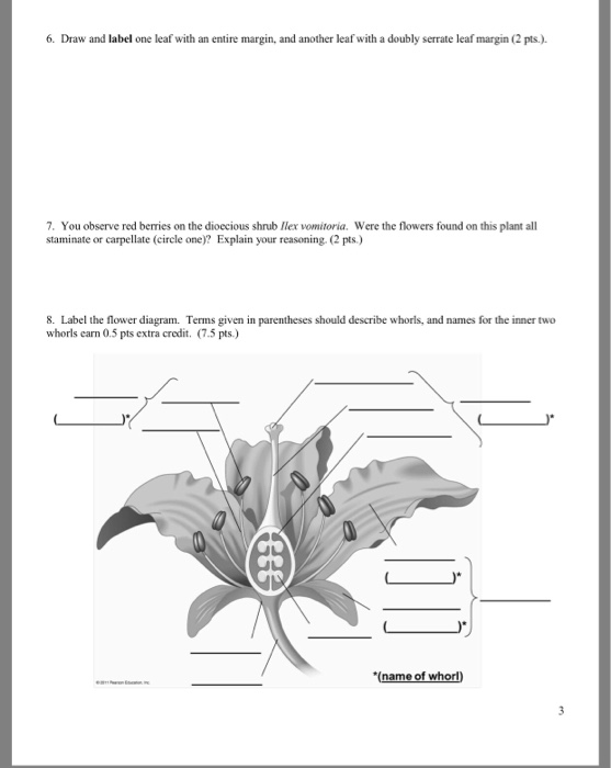 6 draw and label one leaf with an entire margin, and another leaf with a