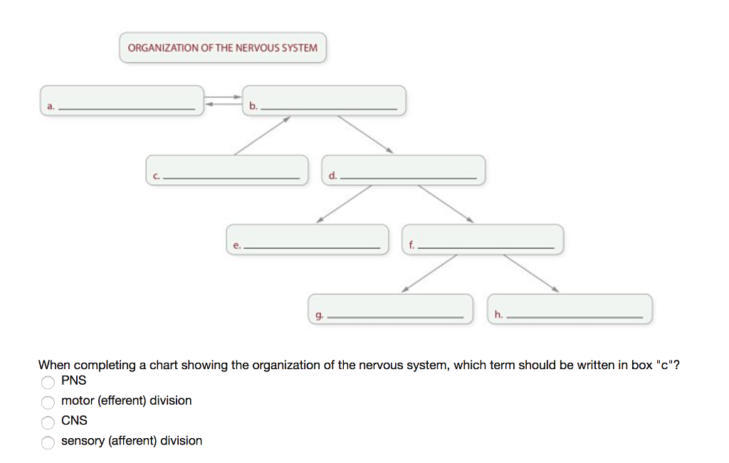 Solved organization of the nervous system a b c d e organization of the nervous system a b c d e g h when completing a chart showing the organization ccuart Gallery