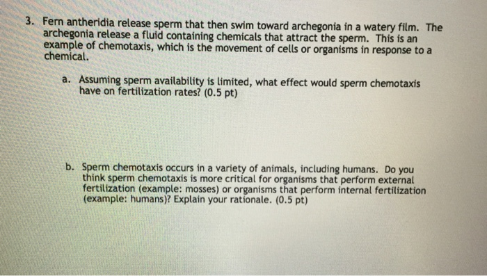 fern sperm chemotaxis C