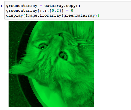 Solved: Cat = Image open('meowp png') Display(cat) 1) Need