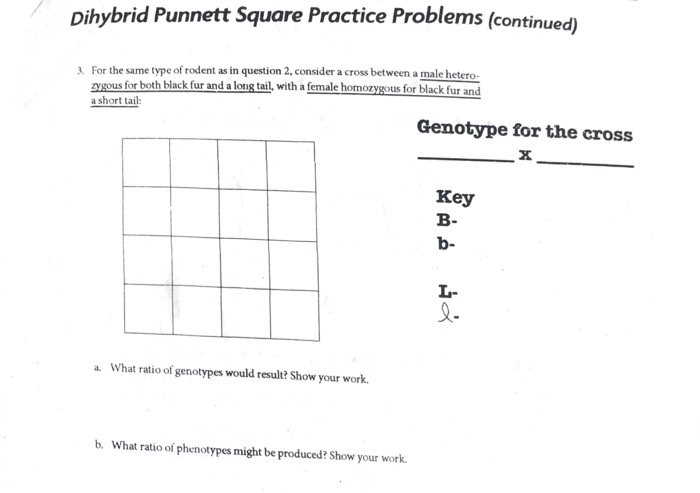 Punnett Square Practice Problems Worksheet Newatvs Info
