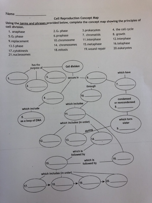 Solved Name Cell Reproduction Concept Map Using The Cell