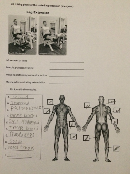 Solved 28 Lifting Phase Of The Seated Leg Extension Kne