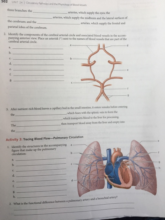 Solved: Post Lab Quizzes Are Also Assignable N MasteringA& ...