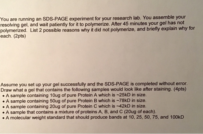 You are running an SDS-PAGE experiment for your research lab. You assemble your resolving gel, and wait patiently for it to polymerize. After 45 minutes your gel has not polymerized. List 2 possible reasons why it did not polymerize, and briefly explain why for each. (2pts) Assume you set up your gel successfully and the SDS-PAGE is completed without error. Draw what a gel that contains the following samples would look like after staining. (4pts) A sample containing 10ug of pure Protein A which is -25kD in size. A sample containing 50ug of pure Protein B which is -78kD in size. A sample containing 20ug of pure Protein C which is ~42kD in size. A sample that contains a mixture of proteins A, B, and C (20ug of each). .A molecular weight standard that should produce bands at 10, 25, 50, 75, and 100kD