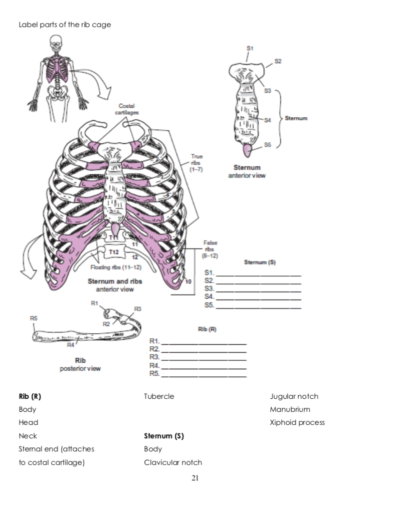 Solved Label Parts Of The Rib Cage S1 4sternum True Anter