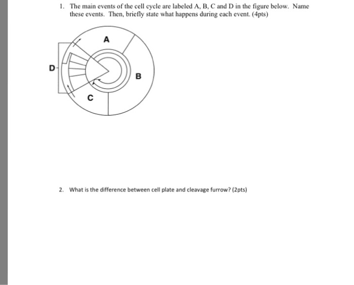 what are the main events of the cell cycle