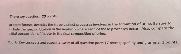 3 point essay format