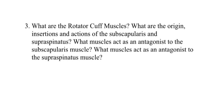 Solved: 3. What Are The Rotator Cuff Muscles? What Are The ...