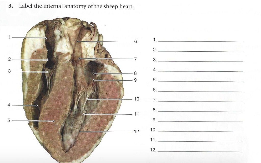 31 Label The Internal Anatomy Of The Heart - Labels ...
